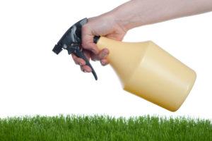 anti pest spray - pest control service