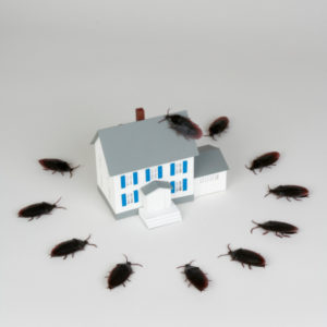A representation of a home that needs termite extermination around Dayton, OH